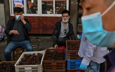 Wuhan's 'Wet Markets' Struggle After Virus Lockdown
